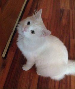 صور قطط رومي13