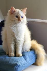 صور قطط رومي17