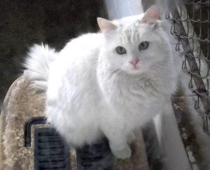 صور قطط رومي18