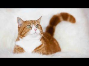 صور قطط رومي23