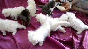 صور قطط رومي27