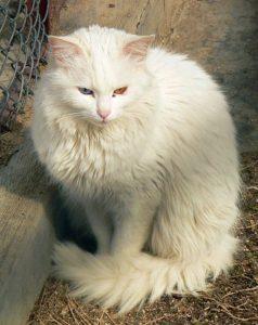 صور قطط رومي8