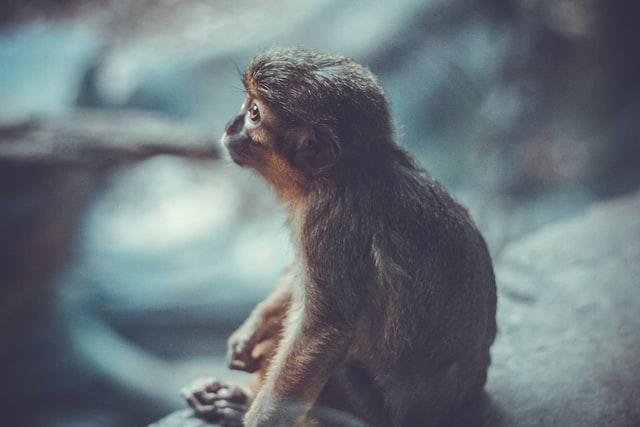 صور حيوانات (5)