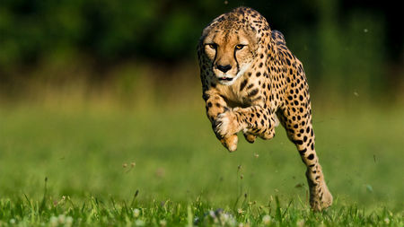 صور حيوانات14