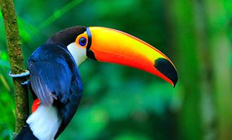صور حيوانات32