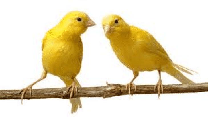 صور عصافير10