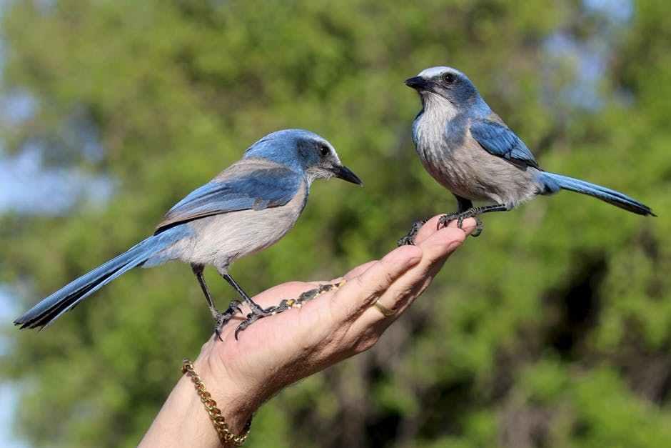 صور عصافير14