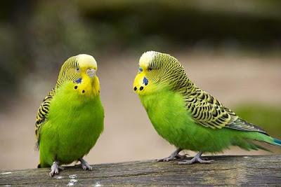 صور عصافير2