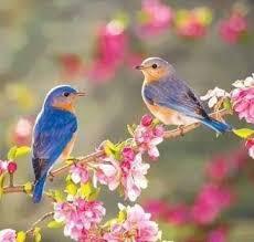 صور عصافير29