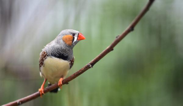 صور عصافير32