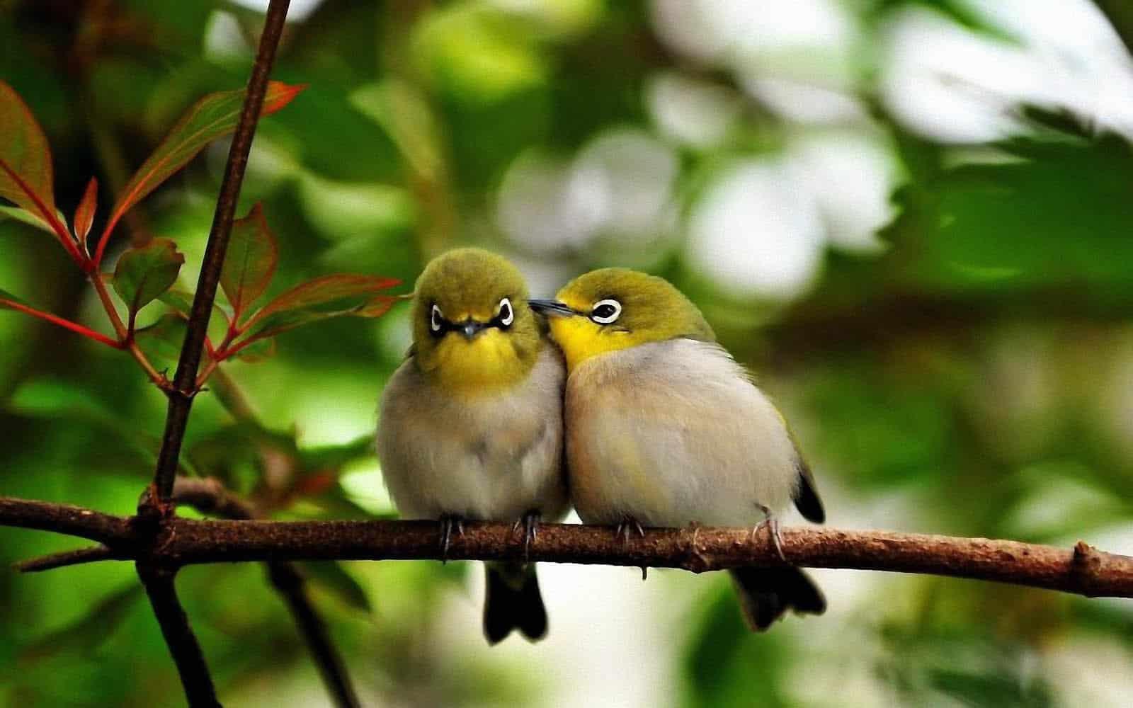 صور عصافير33