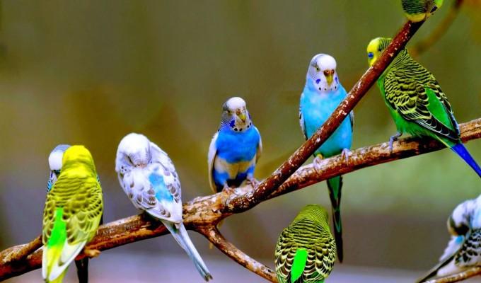 صور عصافير7