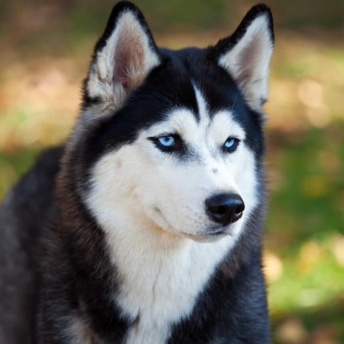 صور كلاب18