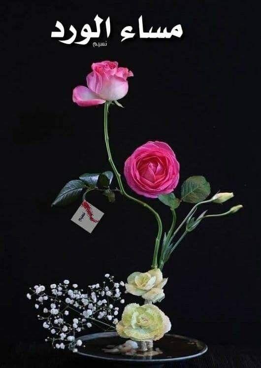 صور مساء الورد12