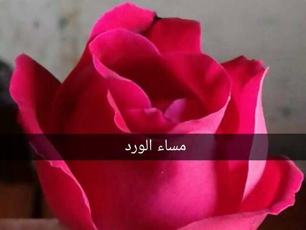 صور مساء الورد19