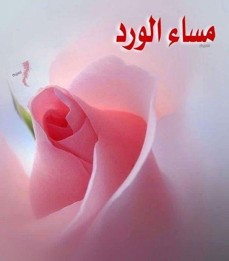 صور مساء الورد20