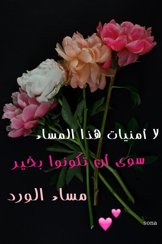 صور مساء الورد7