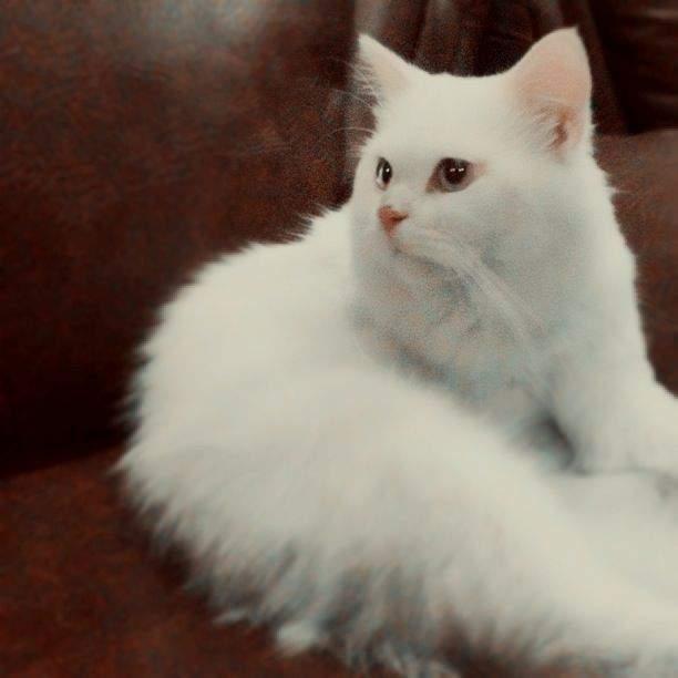 صور قطط رومي14
