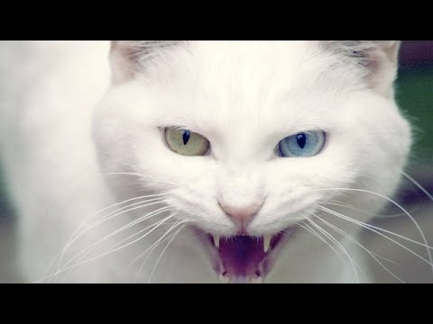 صور قطط رومي25