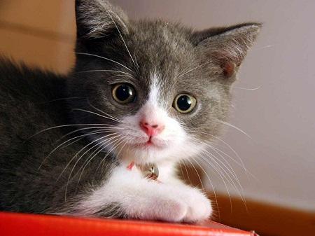 صور قطط رومي26