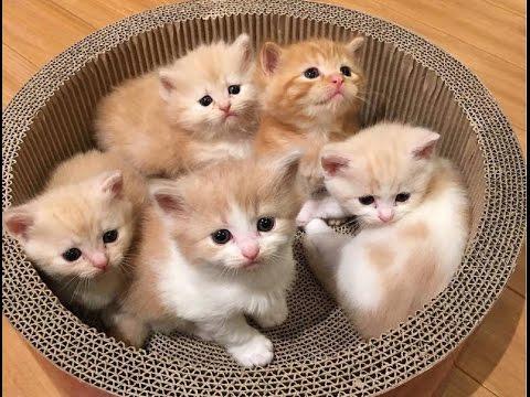 صور قطط رومي5