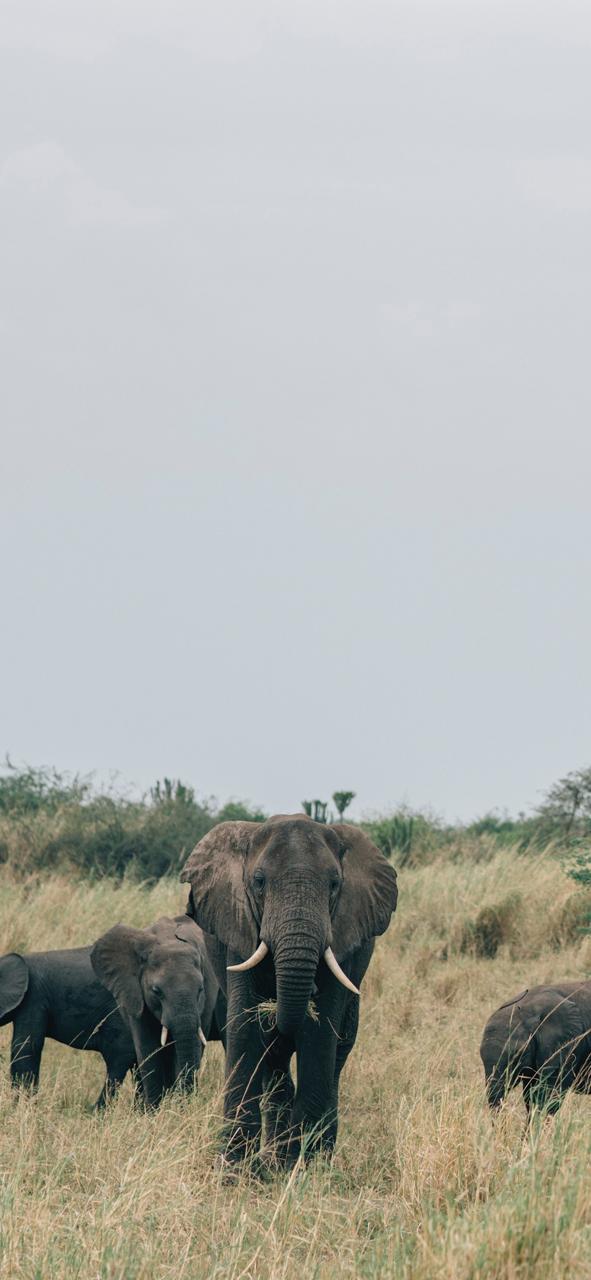 صور حيوانات 45