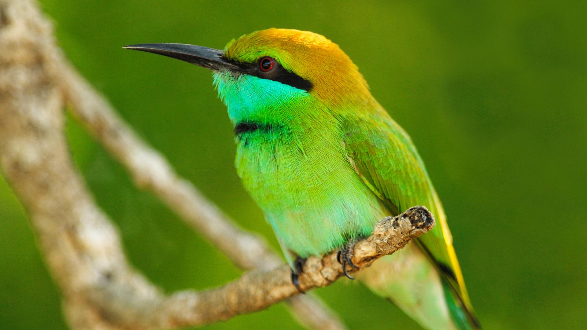 خلفيات حيوانات وطيور
