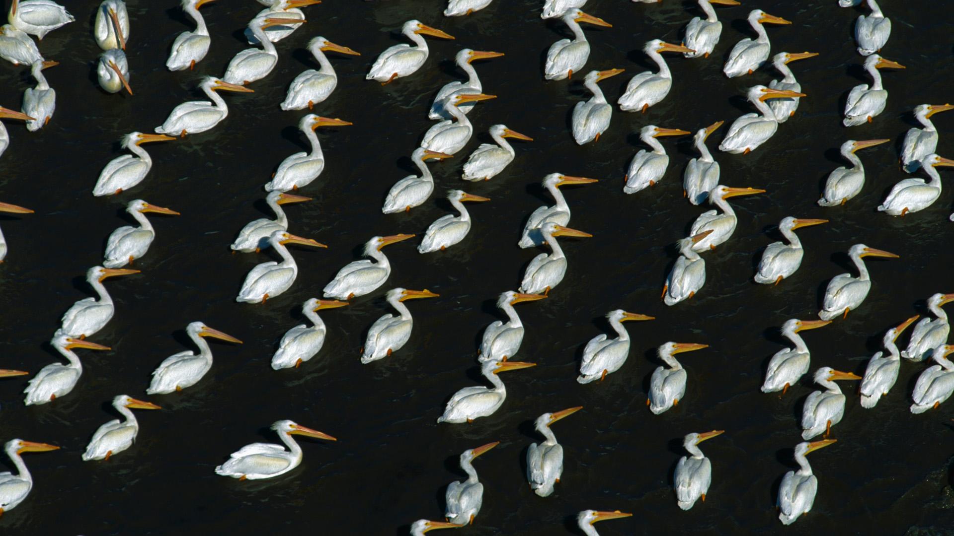 خلفيات حيوانات وطيور6