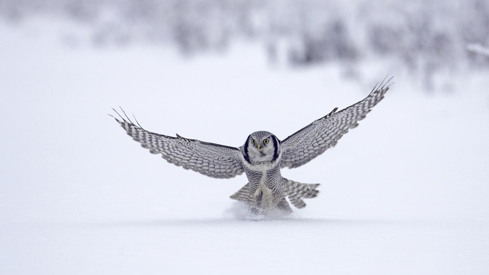 خلفيات حيوانات وطيور5