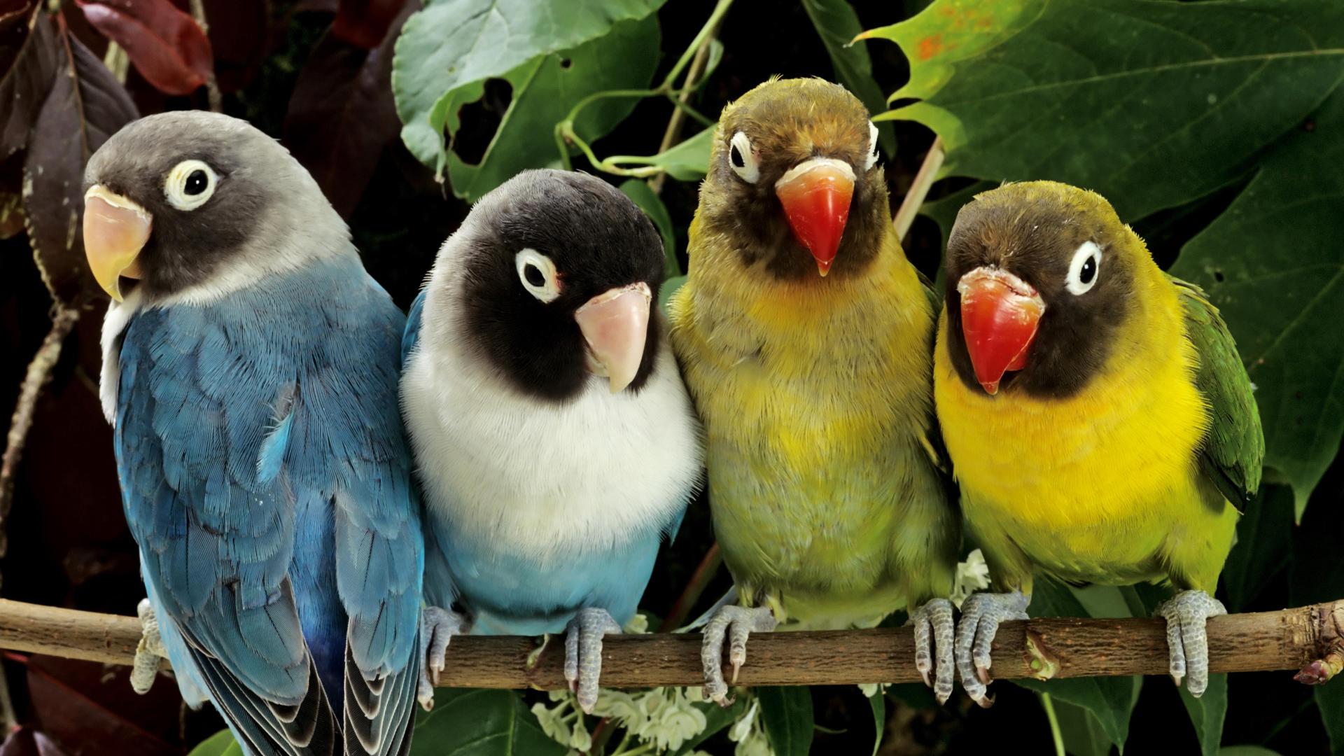 خلفيات حيوانات وطيور10