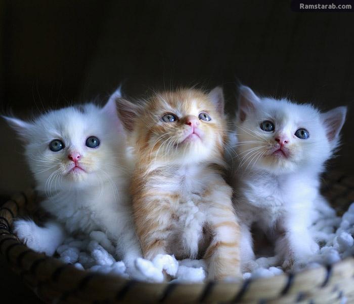 تحميل صور قطط جميلة