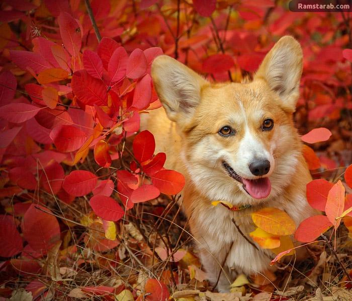 تحميل صور كلاب جميلة