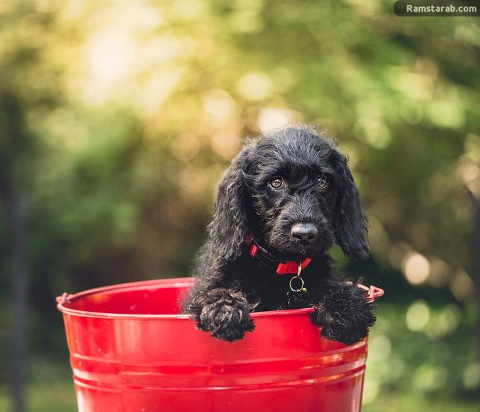 تحميل صور كلاب سوداء