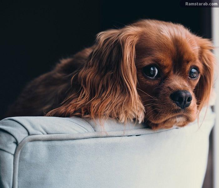 تحميل صور كلاب كيوت