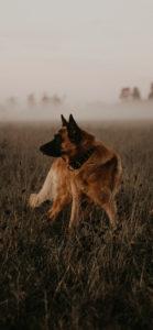 خلفيات كلاب 2