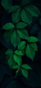 خلفيات موبايل خضراء