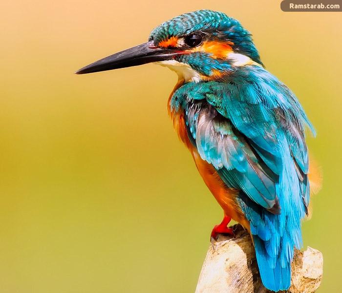 صورة طائر جميل