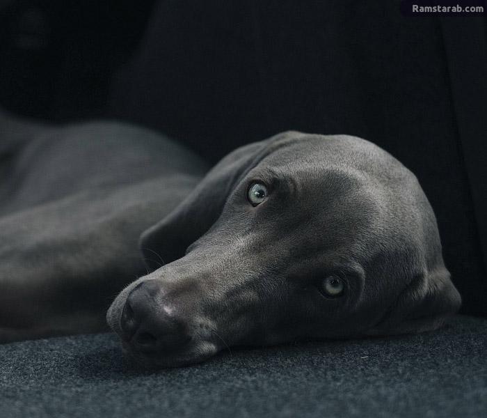 صورة كلب اسود عالة الجودة