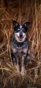 صور كلاب للموبايل