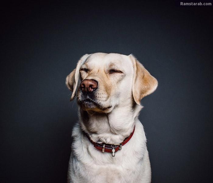 صور كلاب HD