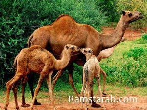 صور حيوانات15