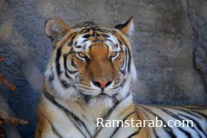 صور حيوانات27
