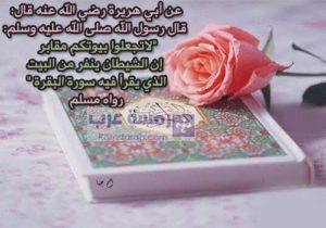 صور قرآن7