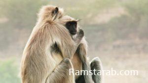 صور حيوانات36