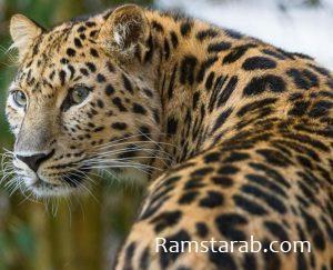 صور حيوانات37