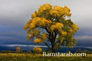 صور اشجار جديدة