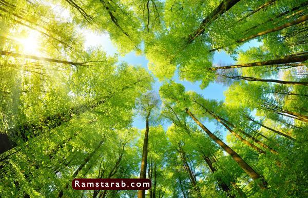 صور عن البيئة30