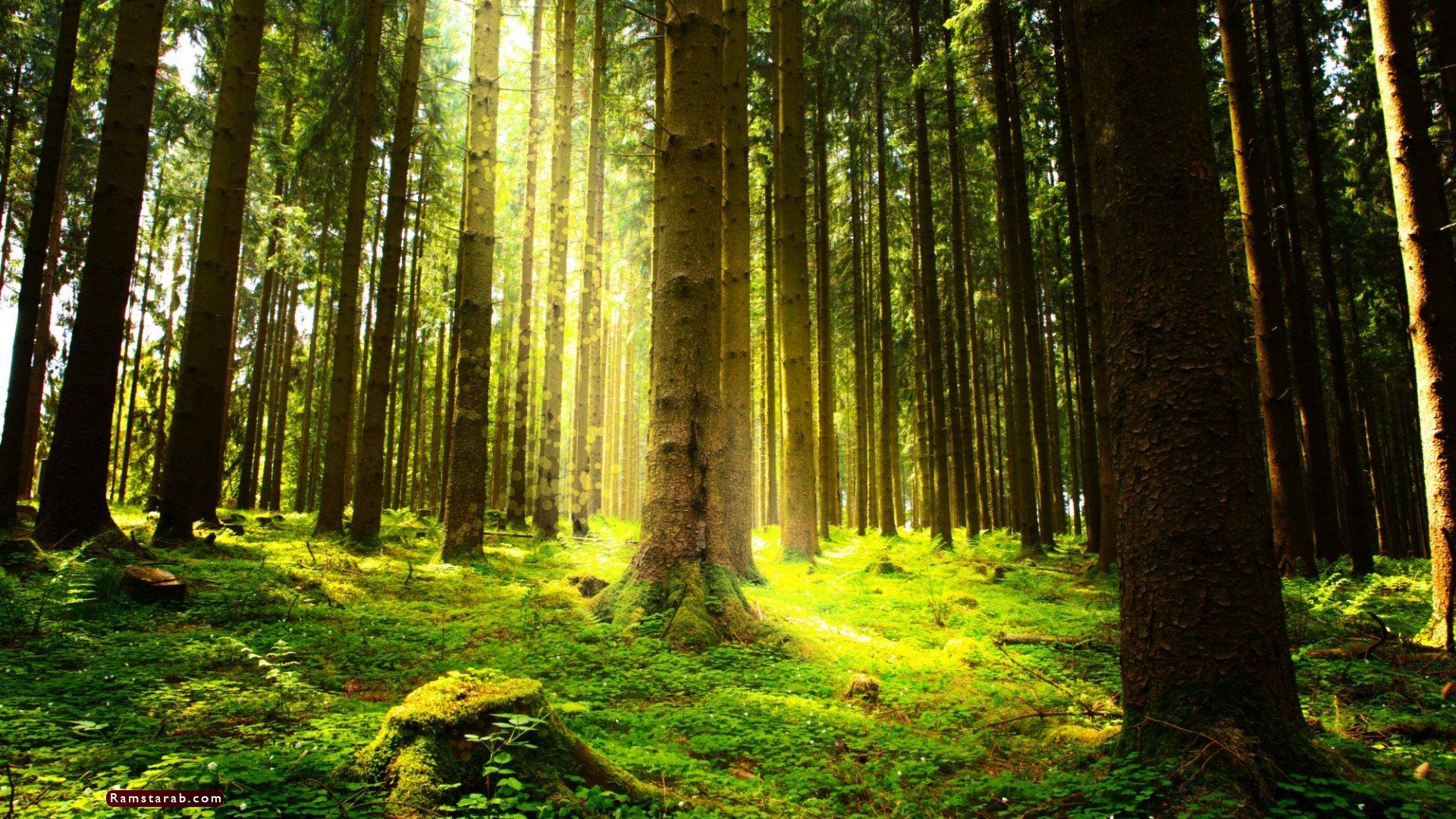 صور عن البيئة17