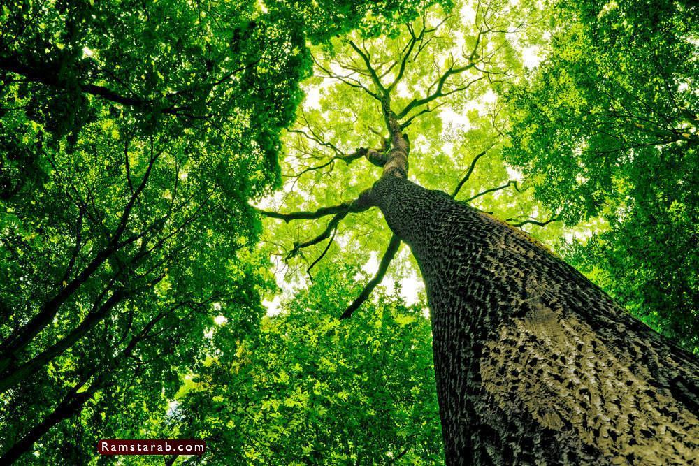 صور عن البيئة4