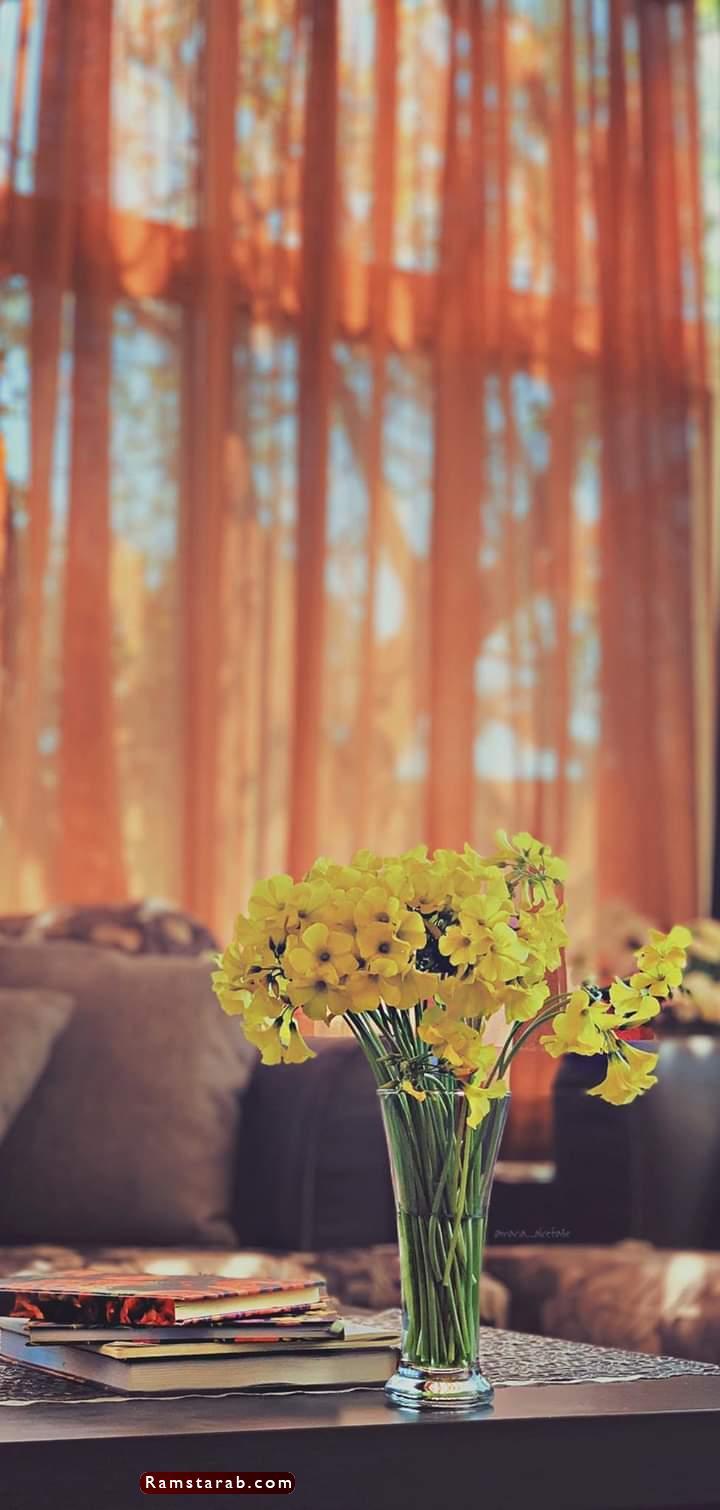 صور ورد اصفر2